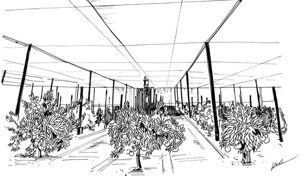 加州大学河滨分校的柑橘多样性采集中心正在筹集资金用于建造保护树木的建筑物。