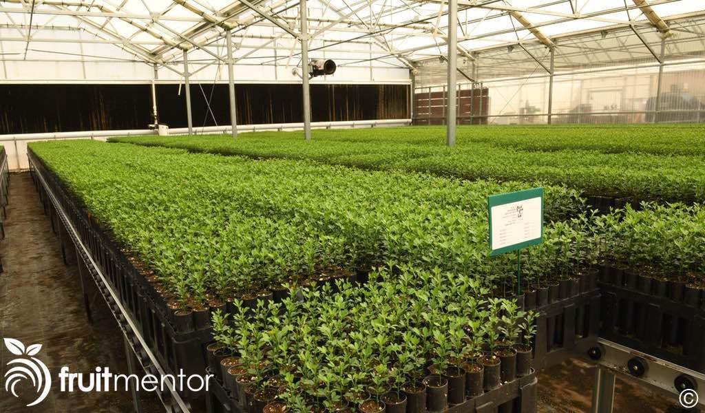 防虫温室。