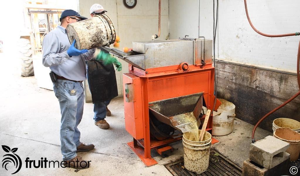 柑橘种子提取机。