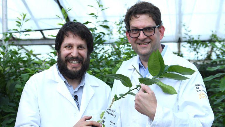 加利福尼亚州的柑橘繁殖与病害——Georgios Vidalakis博士解问答疑